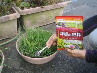 秋植え球根の季節になってきました 10月12日