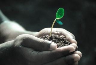 葉っぱと肥料