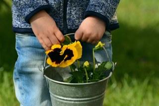 鉢植えと地植えで、肥料を与えるタイミングや量が異なるのは何故?