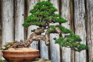 樹木に寿命はある?