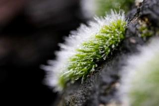 土の表面にある苔で植物の育ちやすさが分かります♪