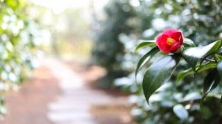 庭の花木庭木に与える良い肥料はないですか