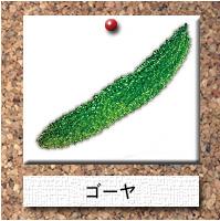 野菜-ゴーヤ