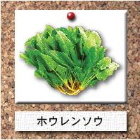 野菜-ホウレンソウ