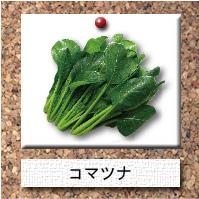 野菜-コマツナ