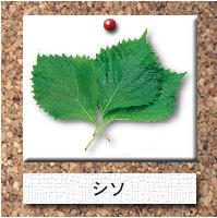 野菜-シソ