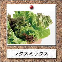 野菜-レタスミックス