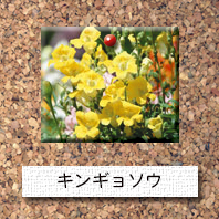 花-キンギョソウ