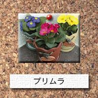 花-プリムラ