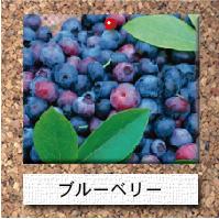 木-ブルーベリー