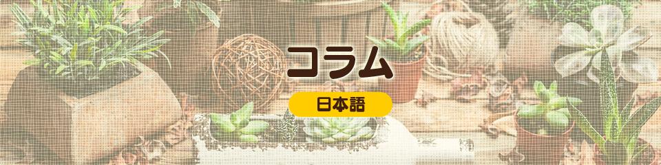 コラム(日本語)