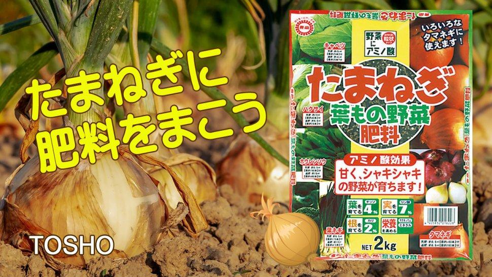 たまねぎ葉もの野菜肥料