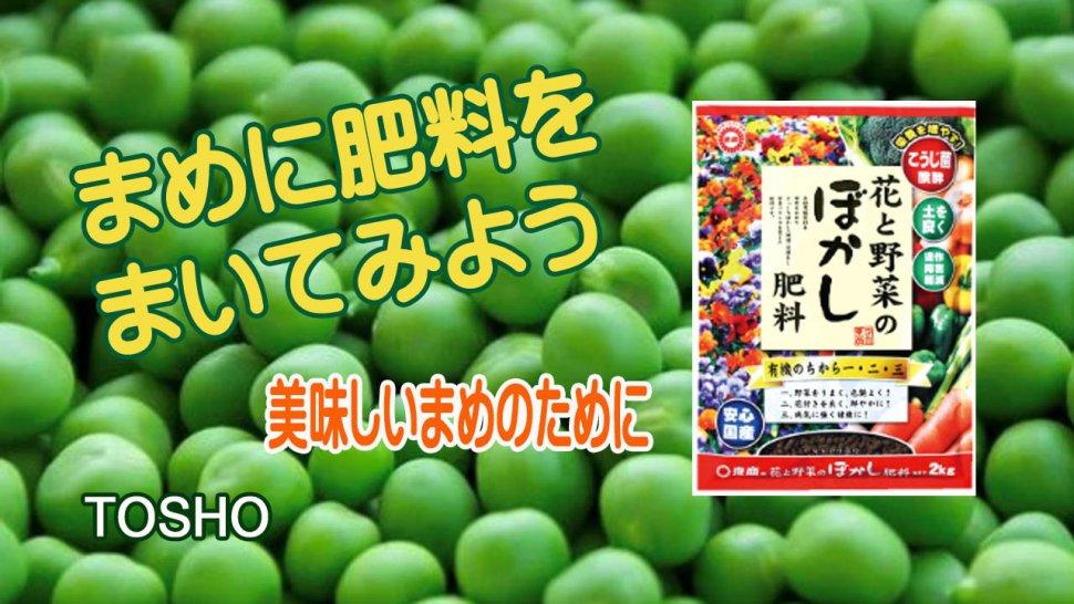 ぼかしの肥料 豆への施肥