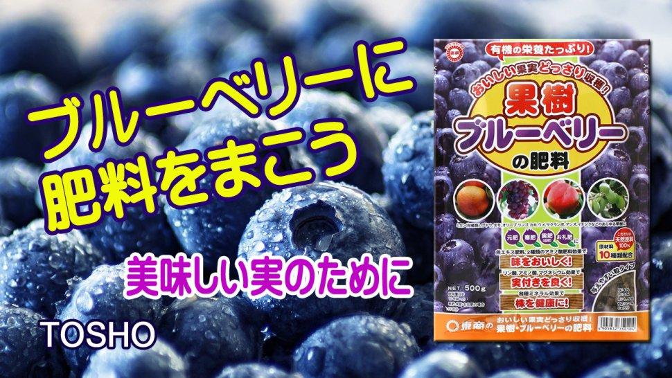 果樹ブルーベリーの肥料