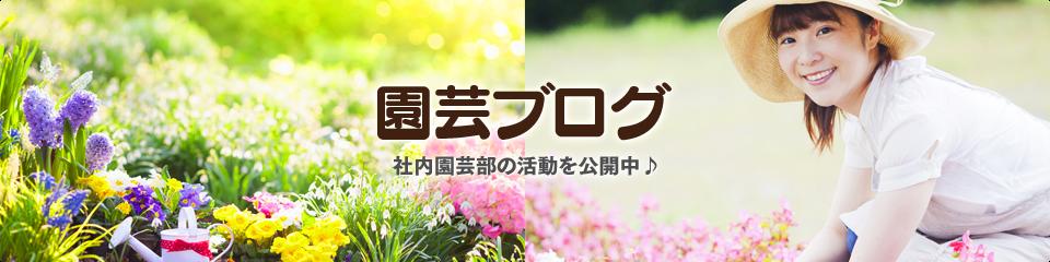 園芸ブログ